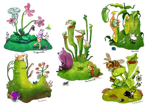 食虫植物の島!